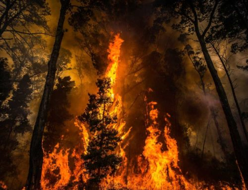 Declaração de Situação de Alerta face ao risco agravado de incêndios florestais