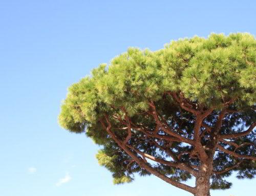 Abate de árvores de grande porte para evitar riscos