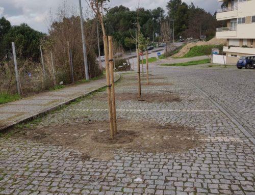 Município leva a cabo a maior intervenção na floresta urbana da cidade
