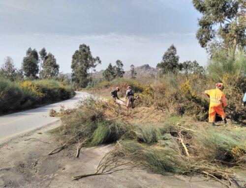 Limpeza florestal do concelho já chegou a mais de 90 hectares